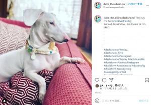 【海外発!Breaking News】ハンディキャップを持つアルビノのダックスフンド、優しい飼い主に出会い元気に成長(米)