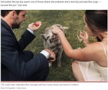 【海外発!Breaking News】結婚式でゲストを呼べなかったカップル ペットのブタを出席させて笑顔で記念撮影(オランダ)