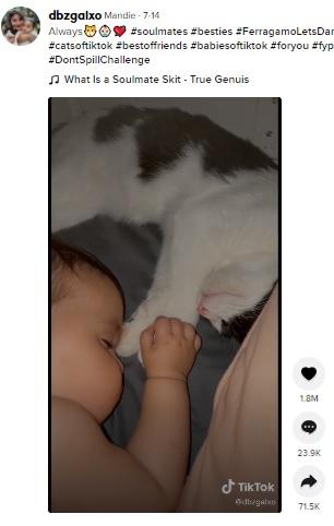 寝ているシオマラちゃんと手を繋ぐスシ(画像は『Mandie 2021年7月14日付TikTok「Always」』のスクリーンショット)