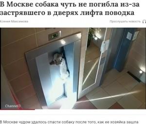 エレベーターで宙吊りになった犬(画像は『Газета.Ru 2021年9月4日付「В Москве собака чуть не погибла из-за застрявшего в дверях лифта поводка」』のスクリーンショット)