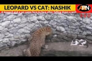 【海外発!Breaking News】ハンティング中に井戸に落ちたヒョウとネコの意外な結末(印)<動画あり>