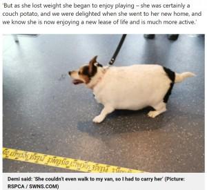 """【海外発!Breaking News】""""風船に足が生えた""""と言われるほど太った犬 飼い主に見放されるもダイエットして第2の人生を歩む(英)"""