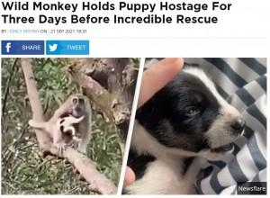【海外発!Breaking News】野生の猿に連れ去られた子犬を3日間かけて救出 都市開発による猿被害が深刻化(マレーシア)<動画あり>