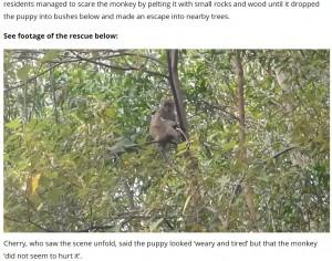 木の高い場所まで登ってしまった猿(画像は『UNILAD 2021年9月21日付「Wild Monkey Holds Puppy Hostage For Three Days Before Incredible Rescue」』のスクリーンショット)