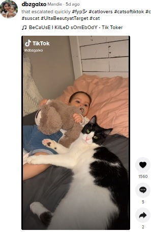 1歳になりずいぶんと成長したスシとシオマラちゃん(画像は『Mandie 2021年9月2日付TikTok「that escalated quickly」』のスクリーンショット)