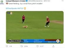 【海外発!Breaking News】クリケットの試合に大興奮の犬が乱入 見事ボールをキャッチして実況者も笑い止まらず(北アイルランド)<動画あり>