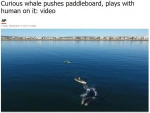 クジラとの遭遇という珍しい光景に、カメラマンも驚く(画像は『ABC Chicago 2021年9月3日付「Curious whale pushes paddleboard, plays with human on it: video」』のスクリーンショット)