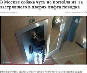 宙吊りになった犬を助ける男性(画像は『Газета.Ru 2021年9月4日付「В Москве собака чуть не погибла из-за застрявшего в дверях лифта поводка」』のスクリーンショット)