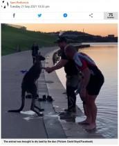 湖の浅瀬で震えていたカンガルー、救出した男性らにお礼か 手を取って握る(豪)<動画あり>