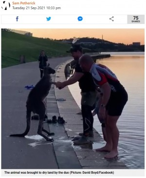 【海外発!Breaking News】湖の浅瀬で震えていたカンガルー、救出した男性らにお礼か 手を取って握る(豪)<動画あり>