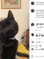 【海外発!Breaking News】家に棲むネズミと仲良しな飼い猫、頭を撫でてキスも!(チリ)<動画あり>