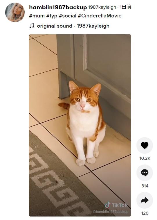 欲張りな飼い猫のせいで勘違いコントのような出来事に(画像は『1987kayleigh 2021年9月7日付TikTok「#mum #fyp #social #CinderellaMovie」』のスクリーンショット)