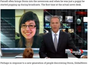 2012年にも生放送中に登場していたストーム(画像は『The Big Lead 2021年8月31日付「Canadian Weather Dog Makes For Very Adorable Broadcast」』のスクリーンショット)
