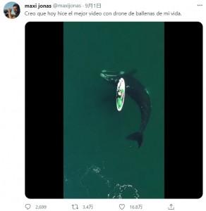 クジラは大きな波を立てないように、静かに水面下を泳ぐ(画像は『maxi jonas 2021年9月1日付Twitter「Creo que hoy hice el mejor video con drone de ballenas de mi vida.」』のスクリーンショット)