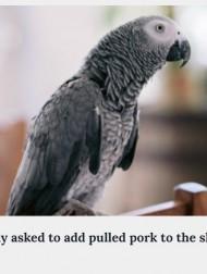 【海外発!Breaking News】賢すぎるペットのヨウム、アレクサを使いこなす姿に「ちょっと不気味」の声(米)<動画あり>