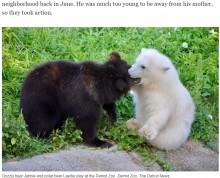 【海外発!Breaking News】それぞれ苦境を乗り越えた白と黒の子グマ 動物園で出会い大親友に(米)<動画あり>