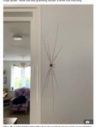 """【海外発!Breaking News】壁に約18センチもの""""クモ""""を見つけた女性、痒みを伴うも後に無害の別の生物と判明(英)"""