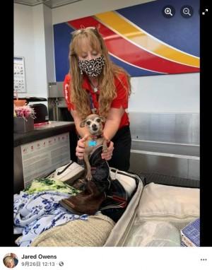 【海外発!Breaking News】空港でスーツケースの重量超過を指摘された夫婦、中に隠れていたチワワに唖然(米)