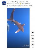 【海外発!Breaking News】深海で巨大なサメに遭遇したダイバー やって来たイルカの行動に「この素晴らしい生き物たちを守りたい」(米)