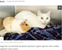 【海外発!Breaking News】猫とモルモットの間に生まれた強い絆 新たな飼い主に引き取られ一緒に過ごすことに(米)<動画あり>