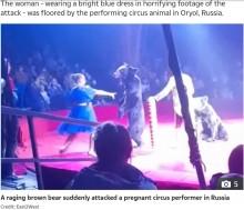 【海外発!Breaking News】サーカス公演中にクマが女性トレーナーを襲う 妊娠したことに嫉妬か(露)<動画あり>