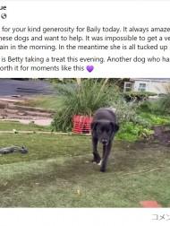 【海外発!Breaking News】保護から601日でようやく人を信頼した犬、初めてスタッフの手からおやつを食べる(英)<動画あり>