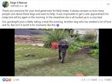 保護から601日でようやく人を信頼した犬、初めてスタッフの手からおやつを食べる(英)<動画あり>