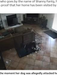 【海外発!Breaking News】誰もいないのに怯えて吠える犬、首輪も外され「霊の仕業」と飼い主(米)<動画あり>