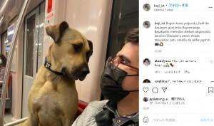 【海外発!Breaking News】バスや電車を毎日乗り継ぐ野良犬 通勤客に笑顔をもたらす癒しの存在に(トルコ)<動画あり>