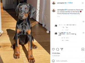 """お座りをするドーベルマンの子犬""""ポルシャ""""(画像は『Sam Asghari 2021年10月8日付Instagram「Surprised my fiancé with our newest member to the Family」』のスクリーンショット)"""