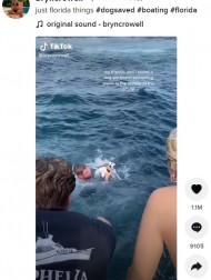 【海外発!Breaking News】海のど真ん中で迷子になった子犬、通りかかったボートに救出される(米)<動画あり>