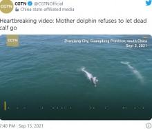 【海外発!Breaking News】子供の亡骸を離さず泳ぐ母イルカに「胸が張り裂けそう」(中国)<動画あり>