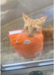 """【海外発!Breaking News】自宅前に放置されたペットフードの袋は愛猫の仕業 地元でも有名な""""泥棒猫""""だった(英)<動画あり>"""
