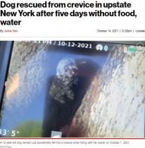 【海外発!Breaking News】岩の割れ目から12m下に落ちた犬、5日ぶりにソーセージで救出!(米)
