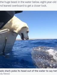 【海外発!Breaking News】ジンベイザメに優しくキスするラブラドール・レトリバーに「心がとけそう」(豪)<動画あり>
