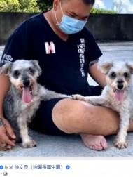 【海外発!Breaking News】繁殖後に毛の塊に覆われ捨てられた2匹の犬、第2の人生を歩む(台湾)<動画あり>