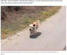 山でひとりぼっちだった犬、走行する車を追いかけて新しい飼い主を見つける(スペイン)<動画あり>