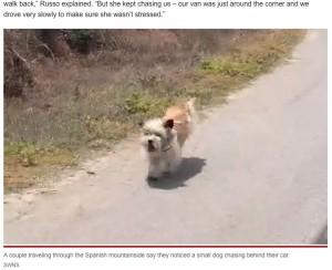 【海外発!Breaking News】山でひとりぼっちだった犬、走行する車を追いかけて新しい飼い主を見つける(スペイン)<動画あり>