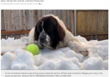 【海外発!Breaking News】安楽死直前の愛犬に最後の雪遊びをプレゼント「穏やかで平和的な別れを」(米)<動画あり>