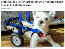 【海外発!Breaking News】脚が麻痺した愛犬のために募金を呼びかけ 5日間で約78万円が集まり「現実味がない」と飼い主驚愕(英)<動画あり>