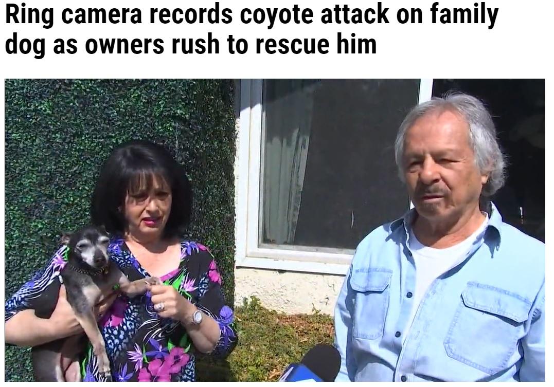 愛犬が襲われた状況を語る家族たち(画像は『WFLA 2021年10月9日付「Ring camera records coyote attack on family dog as owners rush to rescue him」』のスクリーンショット)
