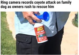 コヨーテ対策のため複数用意していたエアホーン(画像は『WFLA 2021年10月9日付「Ring camera records coyote attack on family dog as owners rush to rescue him」』のスクリーンショット)