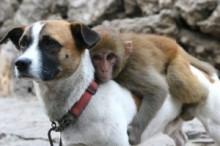 """【海外仰天ニュース】中国発、とても珍しい""""犬猿の仲""""良し写真!"""