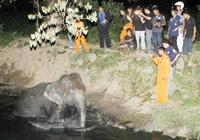 【アジア発!Breaking News】運河にはまった象。2時間の救出劇。(タイ)